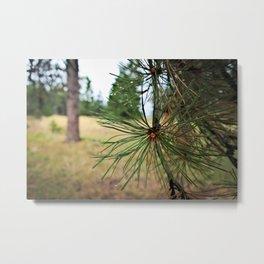 Dewy Pine Metal Print