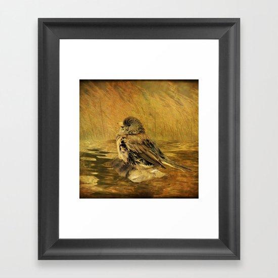 The Bathing Junco Framed Art Print