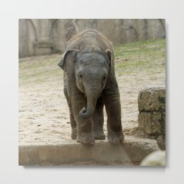 Elephant_20171101_by_JAMFoto Metal Print