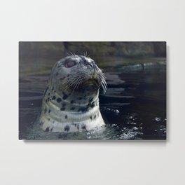 Aquarium Seal Metal Print