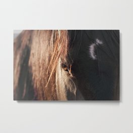 Close up black horse photograph Metal Print