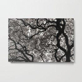 Magnolia Trees in Blossom 02 Metal Print