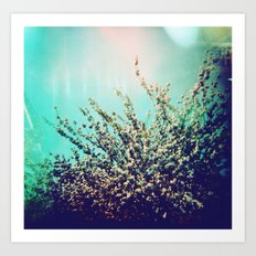 Holga Flowers I  Art Print