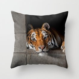 Cincinnati in His Den Throw Pillow