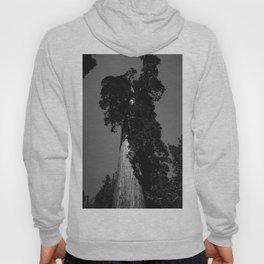 Sequoia National Park VIII Hoody