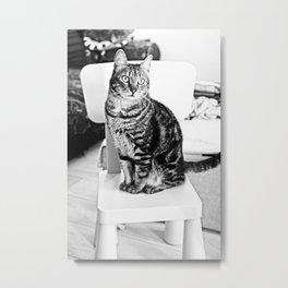 Posing cat Metal Print