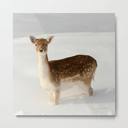 Winter's Beauty Metal Print