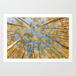 A Walk Among Aspens II Art Print
