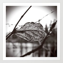 Lakeside leaf Art Print
