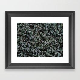 Last Frost of the Season Framed Art Print