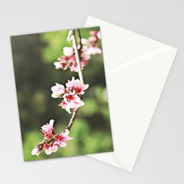Whisp of Spring Stationery Cards