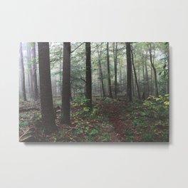 Pfeiffer Arboretum IV Metal Print