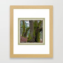 TWO BIG LEAF MAPLE TREES Framed Art Print