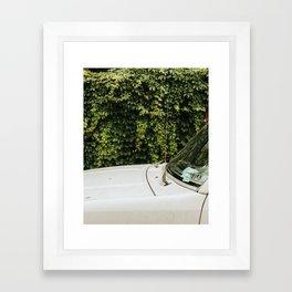 Overgrown, Philadelphia Framed Art Print