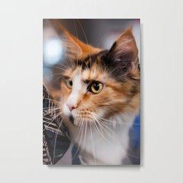 Red hair cat head portrait Metal Print