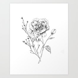 Peony Ink Drawing Art Print