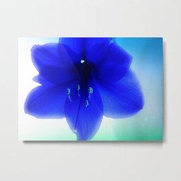 Blue Amaryllis Metal Print