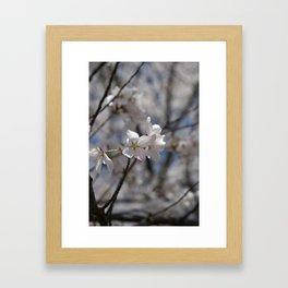 Ivory No. 03 Framed Art Print