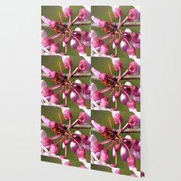 Flowering Redbud with Ladybug Wallpaper