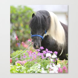 Echo and Flowers Canvas Print