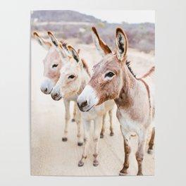 Three Donkeys in Baja, Mexico Poster