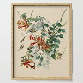 Vintage Hummingbird Illustration - Birds of America Serving Tray