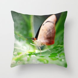 BFX | sitting waiting wishing SQUARE (butterfly) Throw Pillow