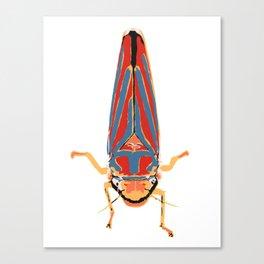 Candy-striped Leafhopper  Canvas Print