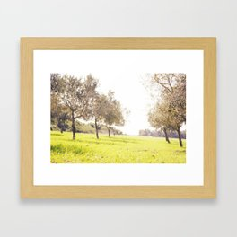 Olive trees heaven - Israel Framed Art Print