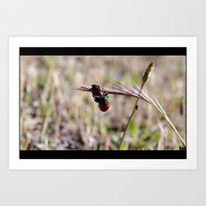 mariquitas - ladybug Art Print