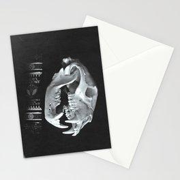 Bear Skull Still Life Stationery Cards