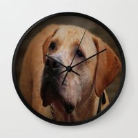 labrador Wall Clocks featuring Golden Labrador by Doug McRae