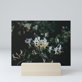flower photography by Annie Spratt Mini Art Print