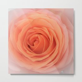Parisian Rose Garden Peach Number 1 Metal Print