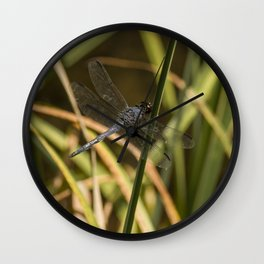 Dragonfly in the marsh Wall Clock