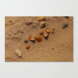 Almost Covered Canvas Print