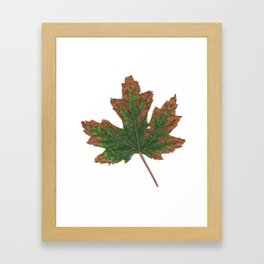 October Specimen Framed Art Print