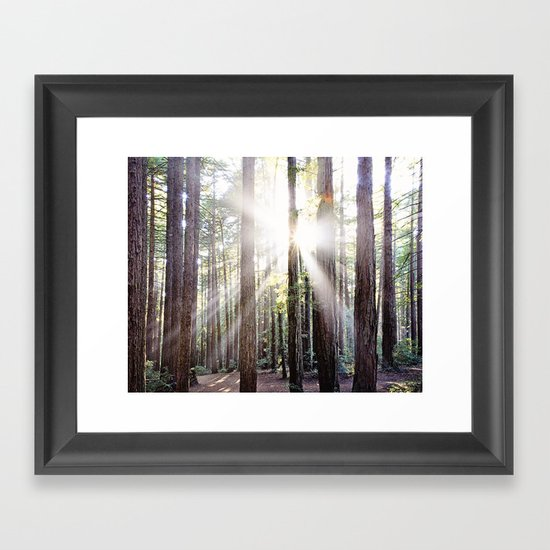 Sunburst Through the Redwoods Framed Art Print