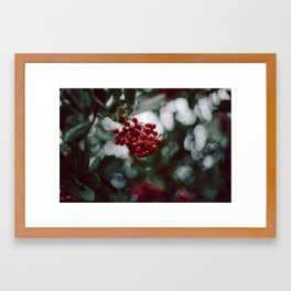 Berries of some kind Framed Art Print