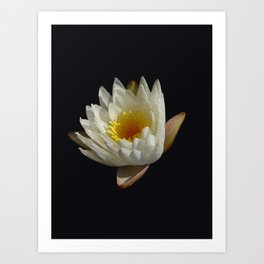 LUCK OF THE LOTUS MK. II Art Print