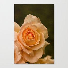 Dew Kissed Rose Floral Canvas Print