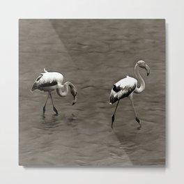 Strutt Like A Juvenile Artistic Flamingo In Grey Metal Print