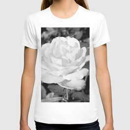 Rose in the sunlight T-shirt