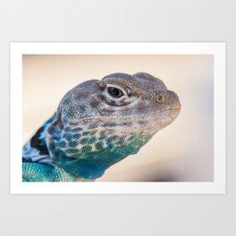 Eastern Collared Lizard Art Print
