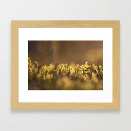 Morning Rays Framed Art Print