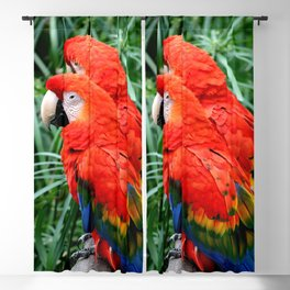 Scarlet Macaws Blackout Curtain