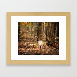 Wild Turkey Framed Art Print