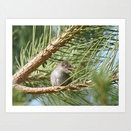 Baby Bird at Sunflower Farm Art Print