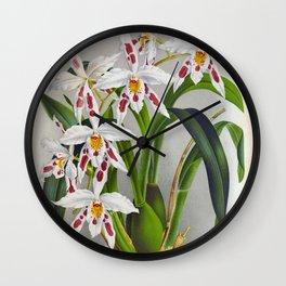 Odontoglossum Crispum Triane Vintage White Orchids Wall Clock