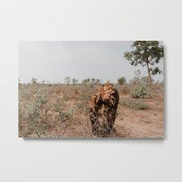 African Tree Stump Metal Print